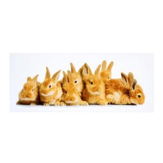 Toile imprimée Animaux - 24 x 58 cm. - Lapins