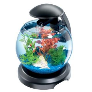 Aquarium Cascade Globe Tetra - 6,8 L - Noir