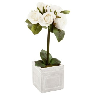 Composition de roses Pot carré - H. 33 cm - Vert