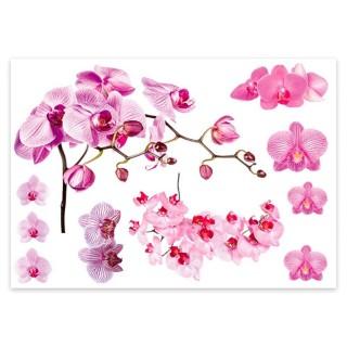 Lot 2x Sticker nature Orchidée - 70 x 50 cm - Blanc et rose